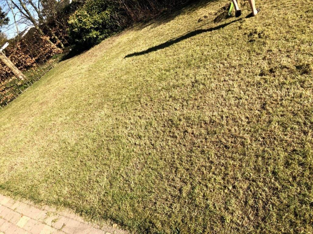 Knap så køn græsplæne
