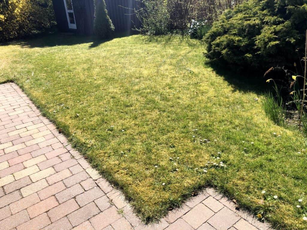 Græsplæne før brug af vertikalskærer